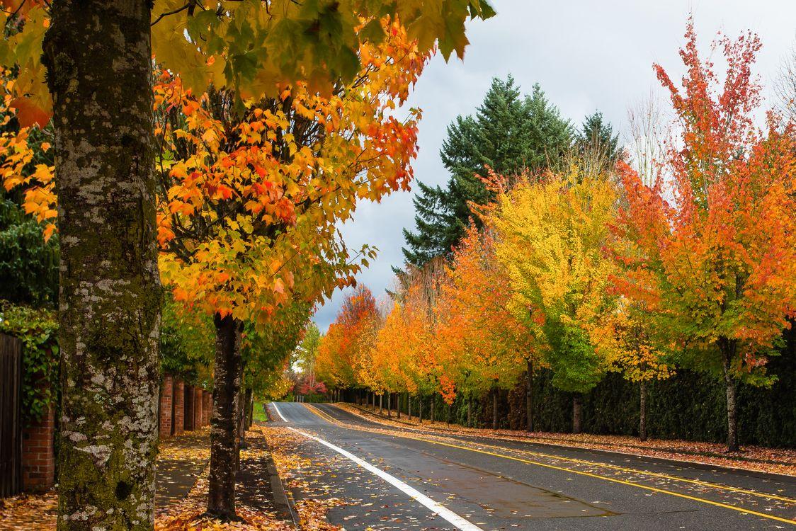 Осенняя дорога и листопад · бесплатное фото