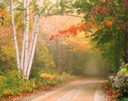 Fog and autumn road · free photo