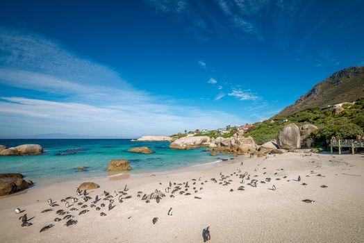Бесплатные фото Пляж Боулдера,Полуостров Кап,Кейптаун,Южная Африка