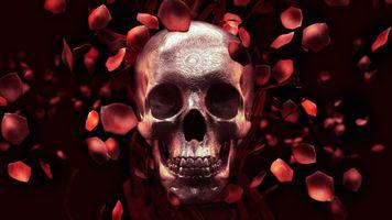 Череп и лепестки роз · бесплатное фото