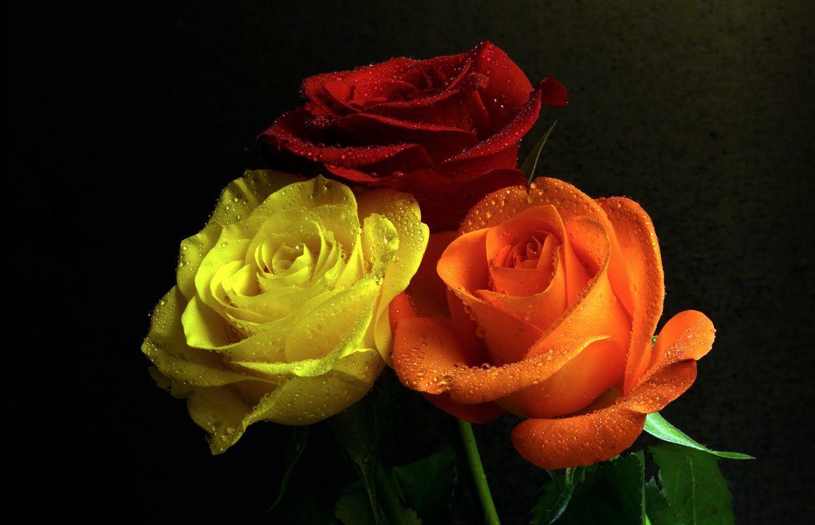 Фото бесплатно флора, чёрный фон, букет - на рабочий стол