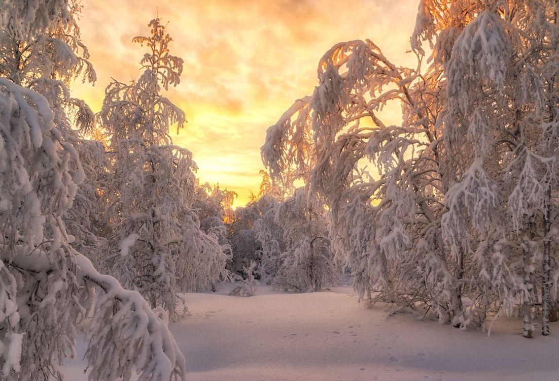 Деревья в снегу · бесплатное фото