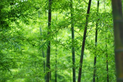 Photo free bamboo, leaves, stem