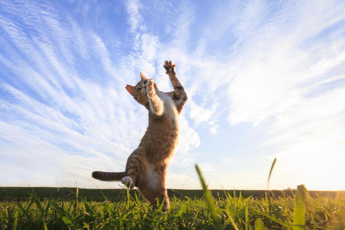 Фото бесплатно кошки, поле, трава, прыжок, животные, природа - на рабочий стол