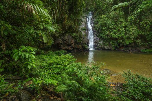 Фото бесплатно пейзаж, природа, джунгли