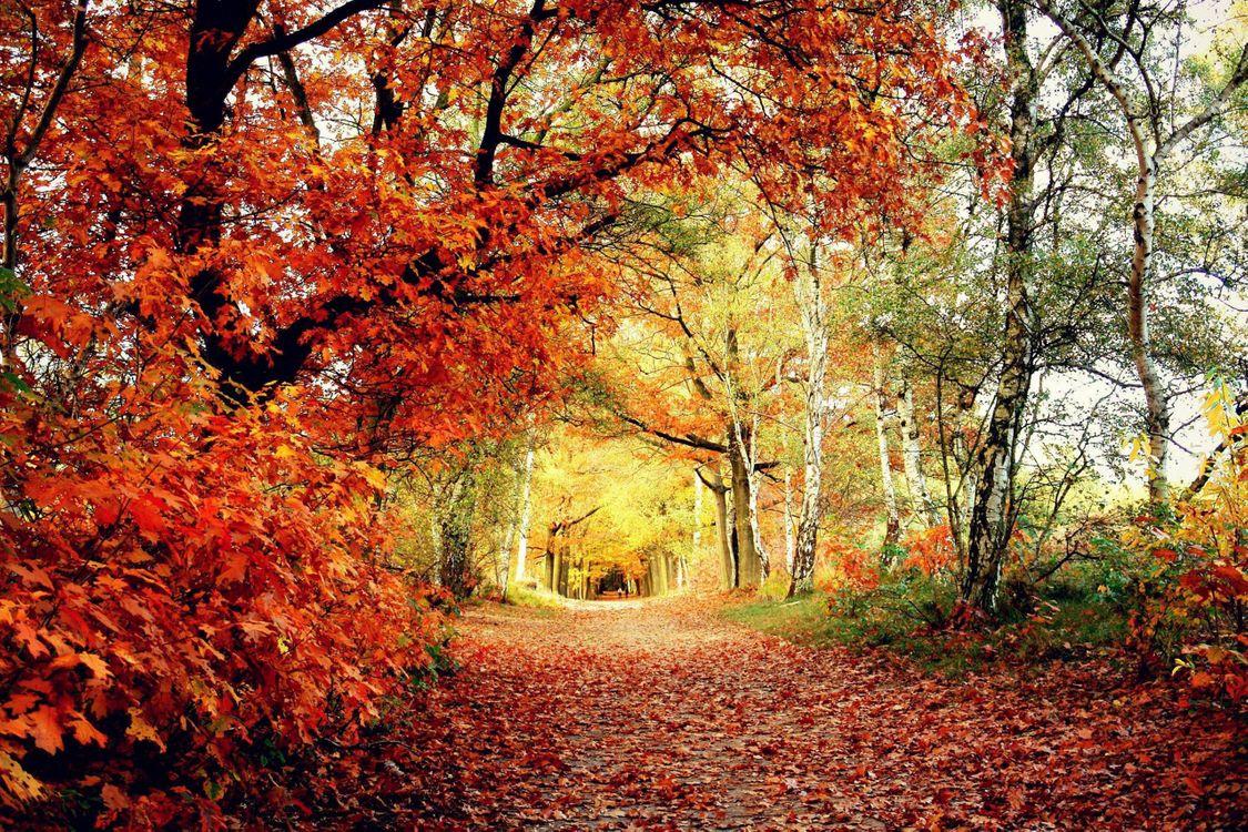 краски осени 3 · бесплатное фото