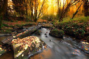 Фото бесплатно природа, деревья, поток