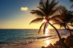 Фото бесплатно Palm tree on the tropical beach, sunrise shot, Dominican Republic