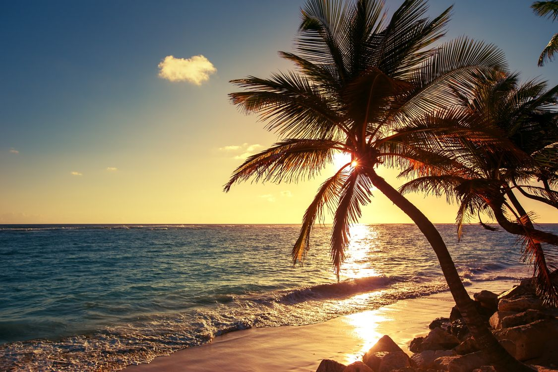 Обои Palm tree on the tropical beach, sunrise shot, Dominican Republic картинки на телефон