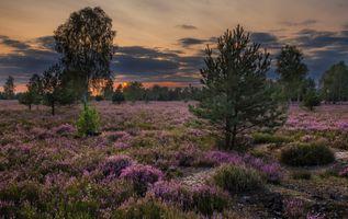 Бесплатные фото закат,поле,лаванда,деревья,цветы,природа,пейзаж