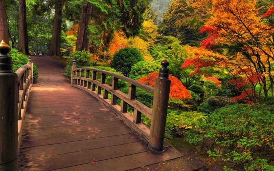 Photo free architecture, autumn, bridges