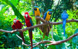 Photo free branches, parrots, colorful