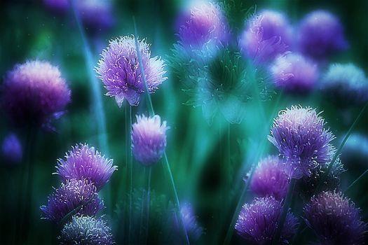 Заставки макро, цветущий лук, цветок