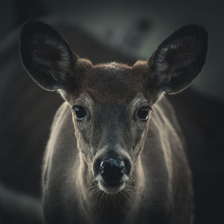 Обои лось, олень, животные, природа, портрет, животное, собака картинки на телефон