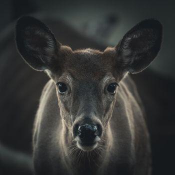Бесплатные фото лось,олень,животные,природа,портрет,животное,собака,дикая природа,пустыня,лес,лань
