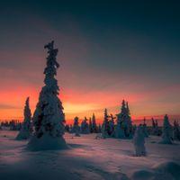Фото бесплатно Финляндия, пейзаж, лес
