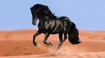 Черный конь скачет по пустыне · бесплатное фото