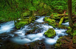 Фото бесплатно Columbia River Gorge, река, лес