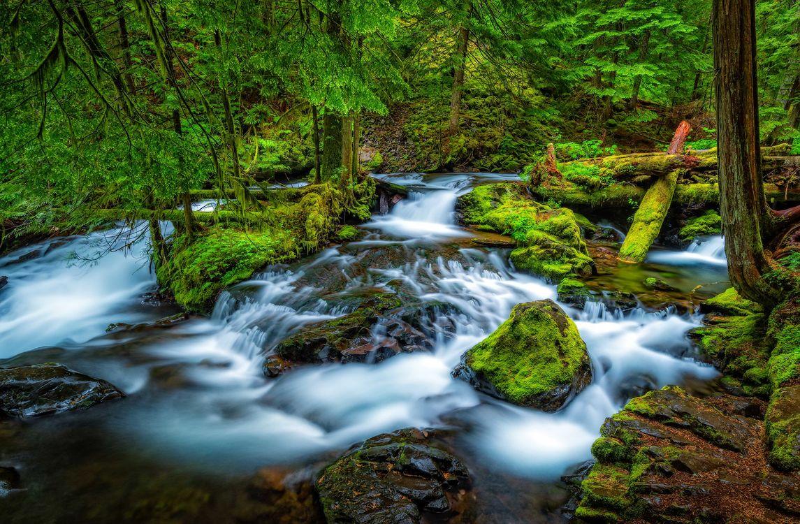 Обои Columbia River Gorge, река, лес картинки на телефон