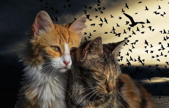 Заставки кошка, кот, любовь