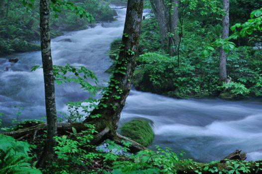 Бесплатные фото лес,река,течение,деревья,камень,мох,природа