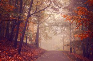 Бесплатные фото осень,туман,парк,дорога,деревья,осенние листья,краски осени