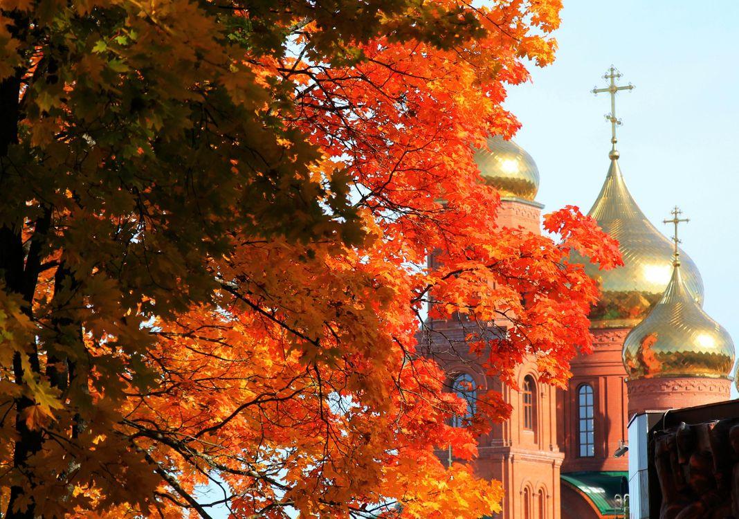 Фото бесплатно осень, клен, листья - на рабочий стол