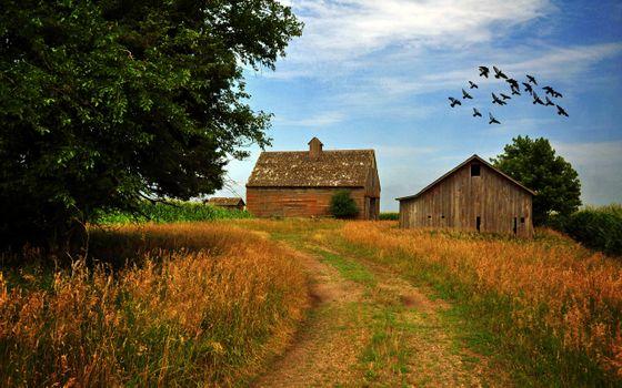 Фото бесплатно птиц, фермы, дома