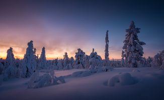 Фото бесплатно Финляндия, снег, деревья