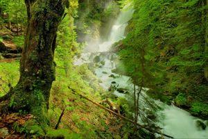 Фото бесплатно лес, природа, река