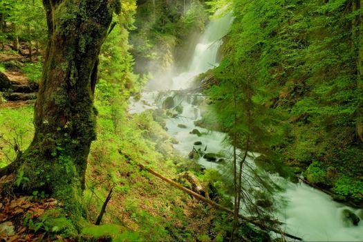 Заставки лес,природа,река,скалы,деревья,водопад