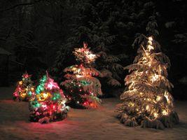Бесплатные фото ночь,новогодняя ёлка,лес,снег,гирлянды,освещение,иллюминация