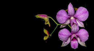 Фото бесплатно орхидеи, лепестки, капли дождя