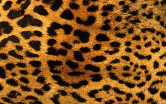 Заставки фон, пятна леопарда, мех