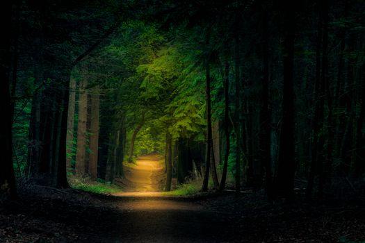 Бесплатные фото лес,деревья,тропинка,пейзаж