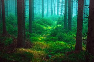 Фото бесплатно деревья, природа, туман