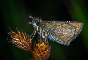 Бесплатные фото макрос,насекомое,бабочка,макросъемка,беспозвоночный,крупным планом,бабочки и бабочки