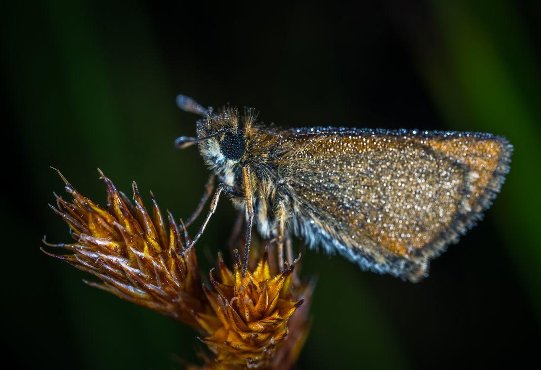 Фото бесплатно макрос, насекомое, бабочка - на рабочий стол