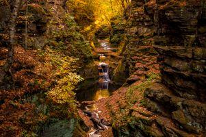 Фото бесплатно лес, скалы, осенние листья