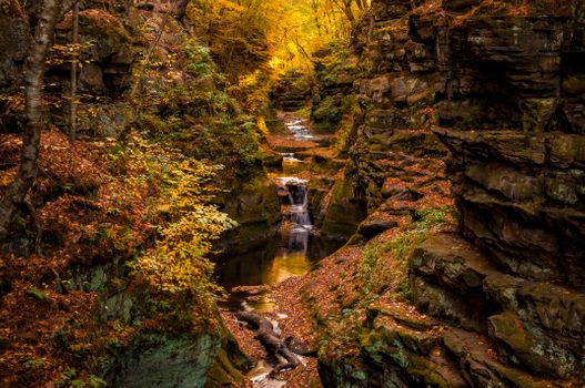 Photo free forest, rocks, autumn leaves