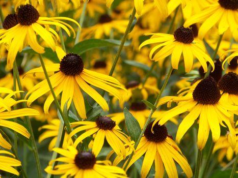 Фото бесплатно ботаника, дикий цветок, ромашка