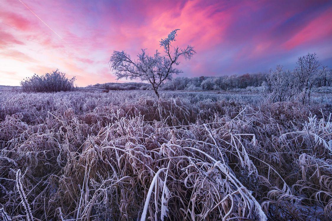 Фото бесплатно Восход солнца на тропе Уайт Бьютт, Саскачеван, Канада, поле, дерево, иней, небо, пейзаж, пейзажи