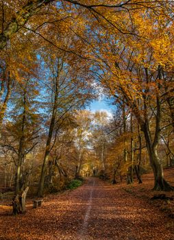 Photo free park, autumn colors, bench