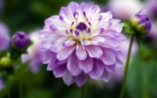 Фото бесплатно капли, цветок, сад