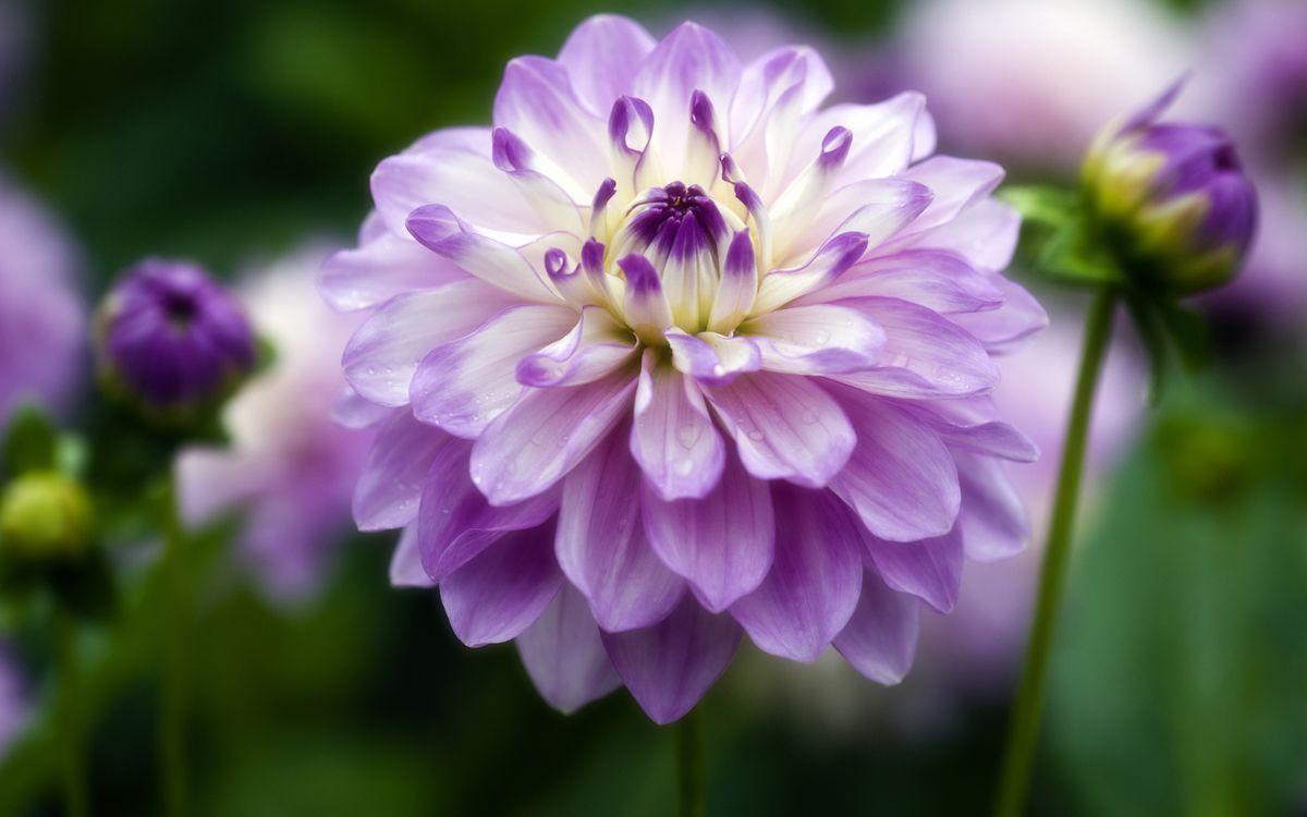 Фото бесплатно капли, цветок, сад - на рабочий стол