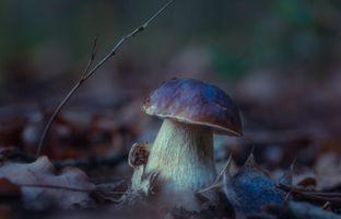 Бесплатные фото гриб,белый,осень,осенние листья,макро,природа