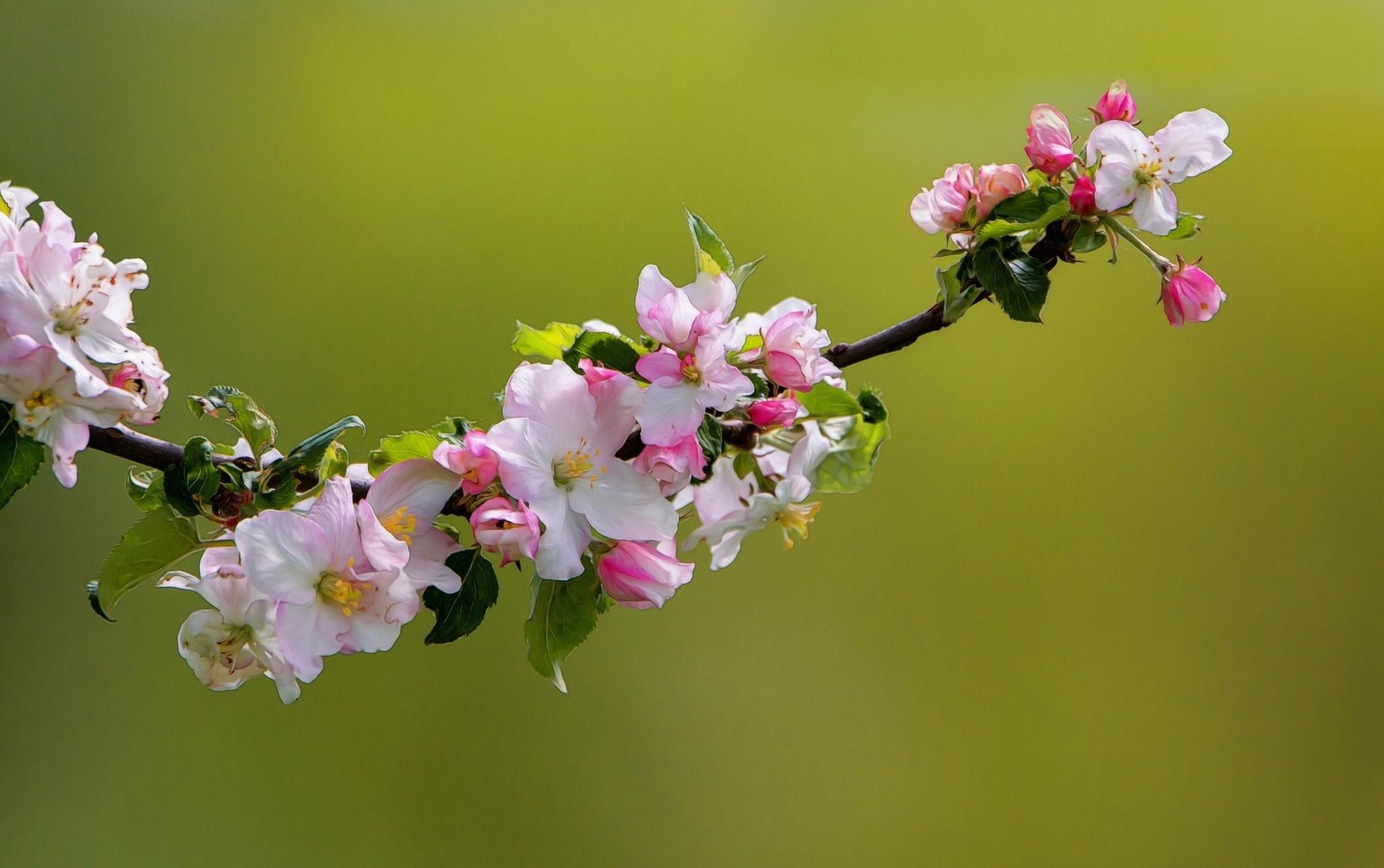 это всех картинка на рабочий стол цветение яблони блогеру одной