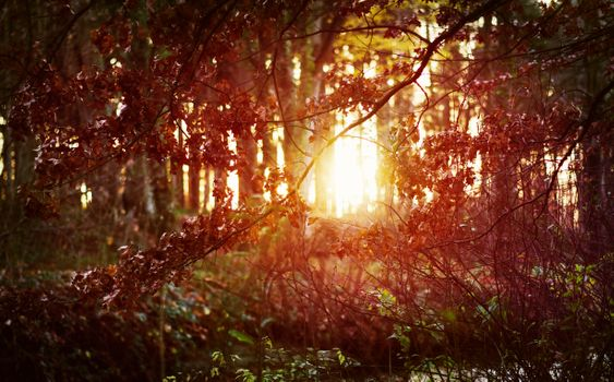 Photo free forest, bushes, sun