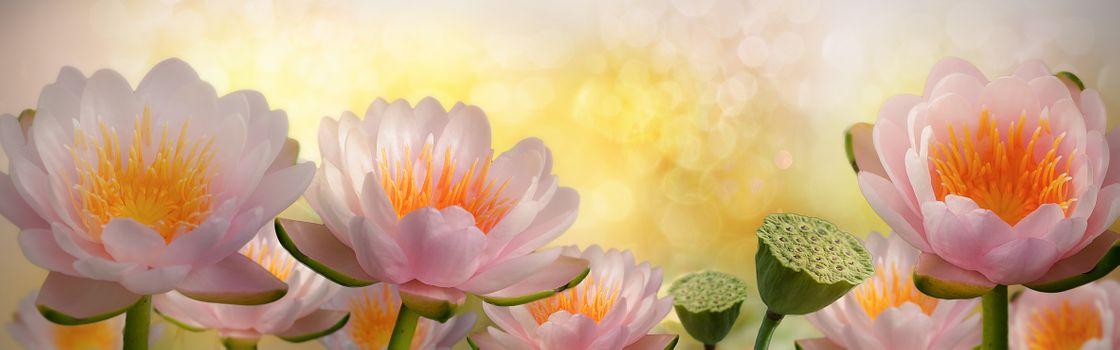 Фото бесплатно макро, водяная лилия, панорама