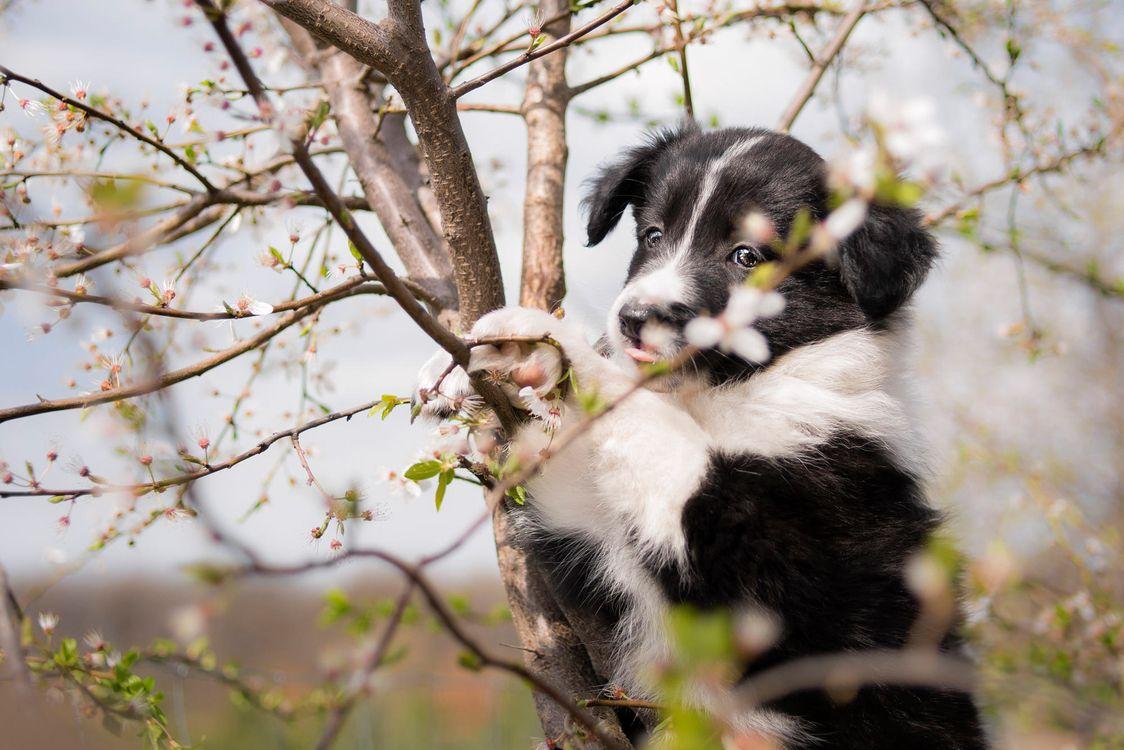 Черно-белый щенок на дереве · бесплатная заставка